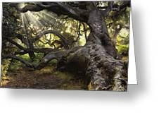 Simply Old Oak  Greeting Card