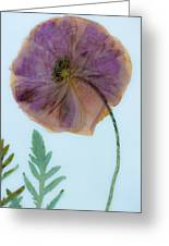 Simply Poppy  Greeting Card