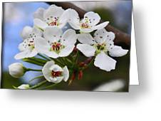 Simply Spring  Greeting Card