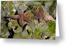 Simply Starfish Greeting Card