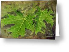 Simply Summer Maple Leaves Greeting Card