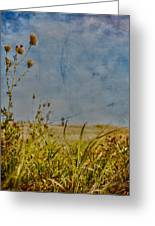 Singing In The Grass Greeting Card