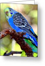 Singing The Blues Greeting Card