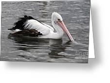 Single Australian Pelican Greeting Card
