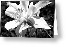 Single Beauty Greeting Card
