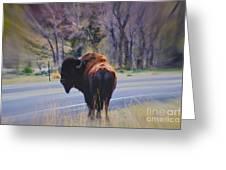Single Buffalo In Yellowstone Np Greeting Card