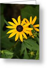 Single Daisy Greeting Card