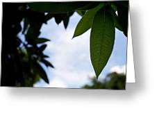 Single Mango Leaf Silhouetted Against The Sky Greeting Card