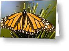 Single Monarch Butterfly Greeting Card