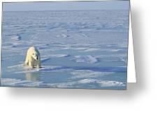 Single Polar Bear Greeting Card