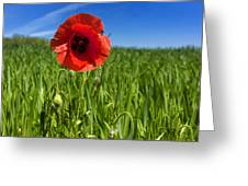 Single Poppy Flower  In A Field Of Wheat Greeting Card