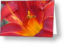 Single Red Lily 2 Greeting Card