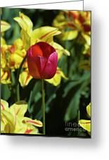 Single Red Tulip Greeting Card