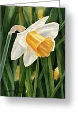 Single Yellow Daffodil Greeting Card