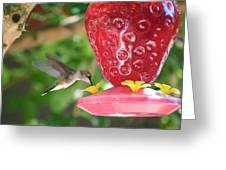 Hummingbird Sipping Greeting Card