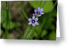 Sisters Of The Purple Plants Greeting Card