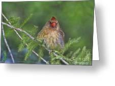 Sitting In The Cedar Greeting Card