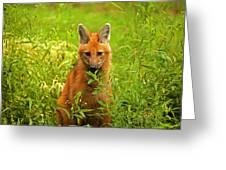 Sitting Wolf Greeting Card