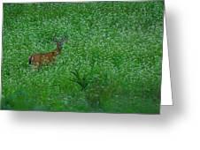 Six Point Deer In Wildflowers Greeting Card