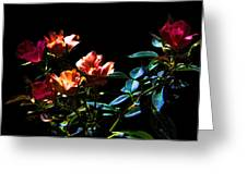 Six Roses Of The Night Greeting Card