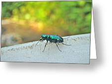Six-spotted Tiger Beetle - Cicindela Sexguttata Greeting Card