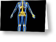 Skeleton And Ligaments, Artwork Greeting Card