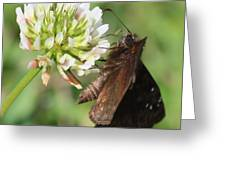 Skipper On Clover Square Greeting Card