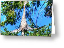 Puget Sound Great Blue Heron Skirt Wings Greeting Card