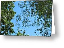 Sky And Leaves Greeting Card