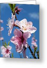 Sky High Cherry Blossoms Greeting Card