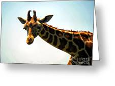 Sky High Greeting Card