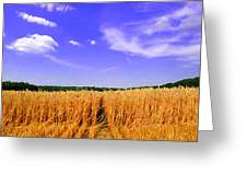 Sky Over The Field 3 Ae  Greeting Card