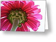 Sky Petals Greeting Card