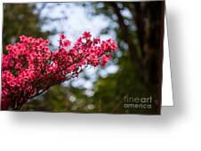 Skylit Blooms Greeting Card