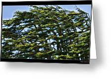 Slanted Branches Greeting Card