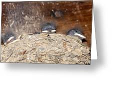 Sleeping Barn Swallows Greeting Card