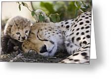 Sleeping Cheetah And Cub Kenya Greeting Card