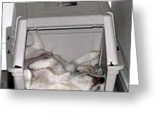 Sleeping In The Dog House Greeting Card