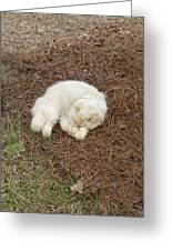 Sleeping Ivory The Cat Greeting Card