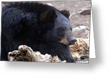 Sleepy Black Bear Greeting Card