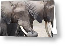 Sleepy Elephants Greeting Card