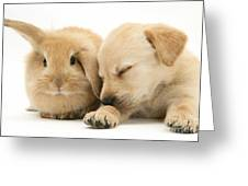 Sleepy Puppy And Rabbit Greeting Card