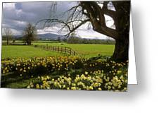 Slievenamon, Ardsallagh, Co Tipperary Greeting Card