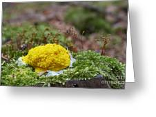 Slime Mould Greeting Card