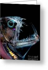 Sloanes Viperfish Greeting Card