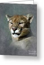 Slumbering Mountain Lion Greeting Card
