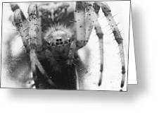 Small Alberta Spider Greeting Card