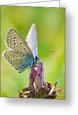 Little Butterfly Greeting Card