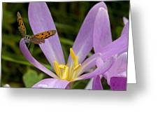 Small Copper Butterfly On Flower Greeting Card