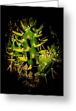 Small Green Cactus Greeting Card